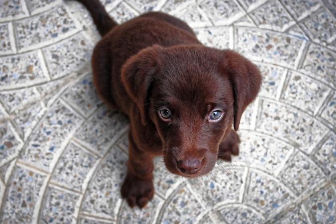 puppy-1047722_1280